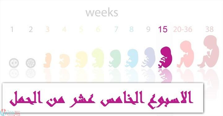 اعراض الحمل في الاسبوع الخامس عشر : كل ما تحتاجي معرفته! 4