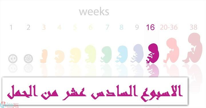 اعراض الحمل في الاسبوع السادس عشر : كل ما تحتاجي معرفته! 12